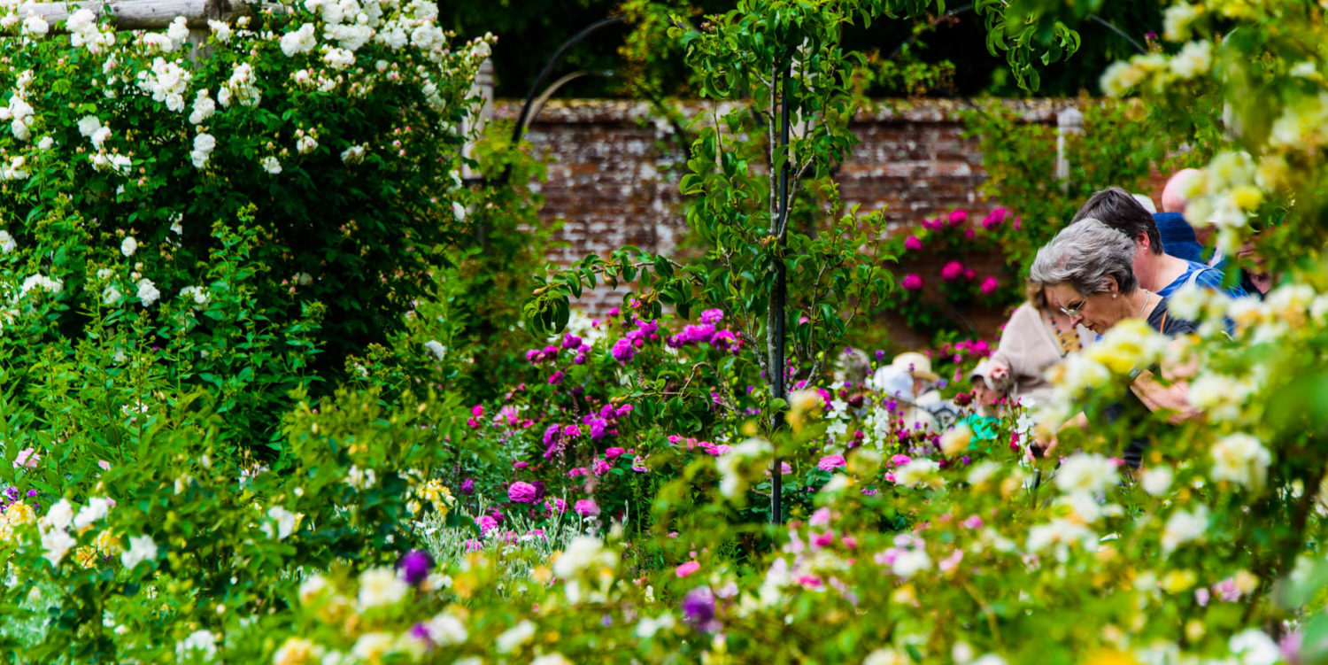 Arda, Botanica, England, Hampshire, Mottisfont, National Trust, Roses, The World
