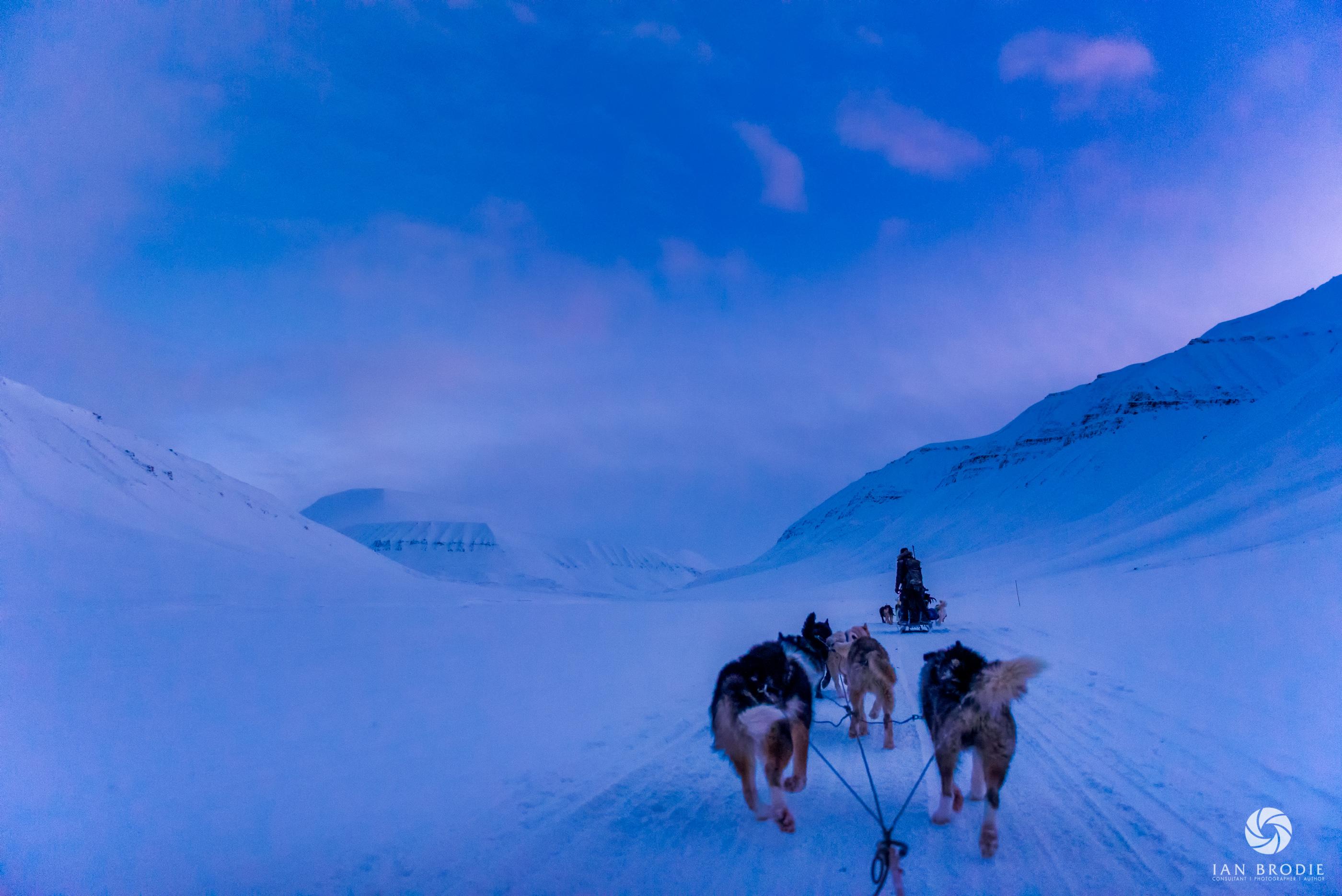 Svalbard Dog Sledding
